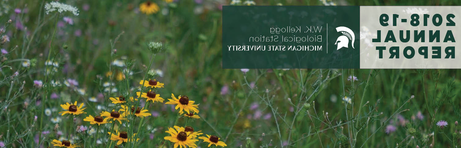 Image of the 2018-19 W.K.凯洛格生物站 annual report, featuring a field of native flowers and a banner that says, 2018-19 annual report.